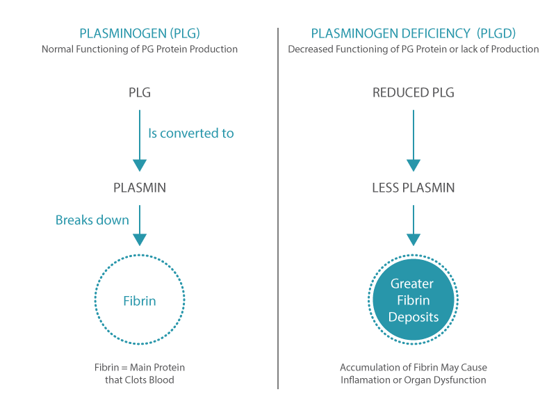 What is Plasminogen role in the body?